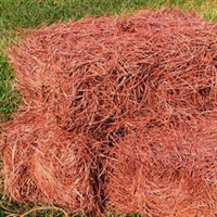 Delivered Premium Slash Bales