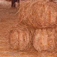 Delivered Premium Longleaf Bales